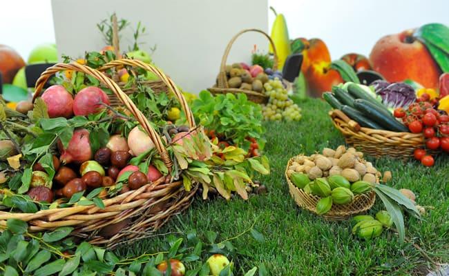 Sa Scrussura: coltivazioni Biologiche