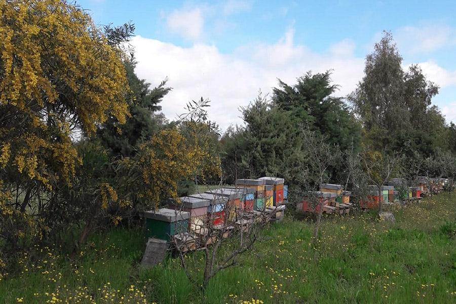 Apinath - Miele di Sardegna