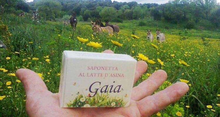 Gaia, il sapone al latte d'asina